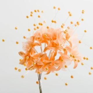 Gipskruid Peach - 72 stuks